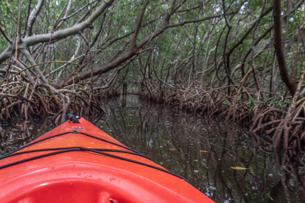 Weedon Island Kayaking