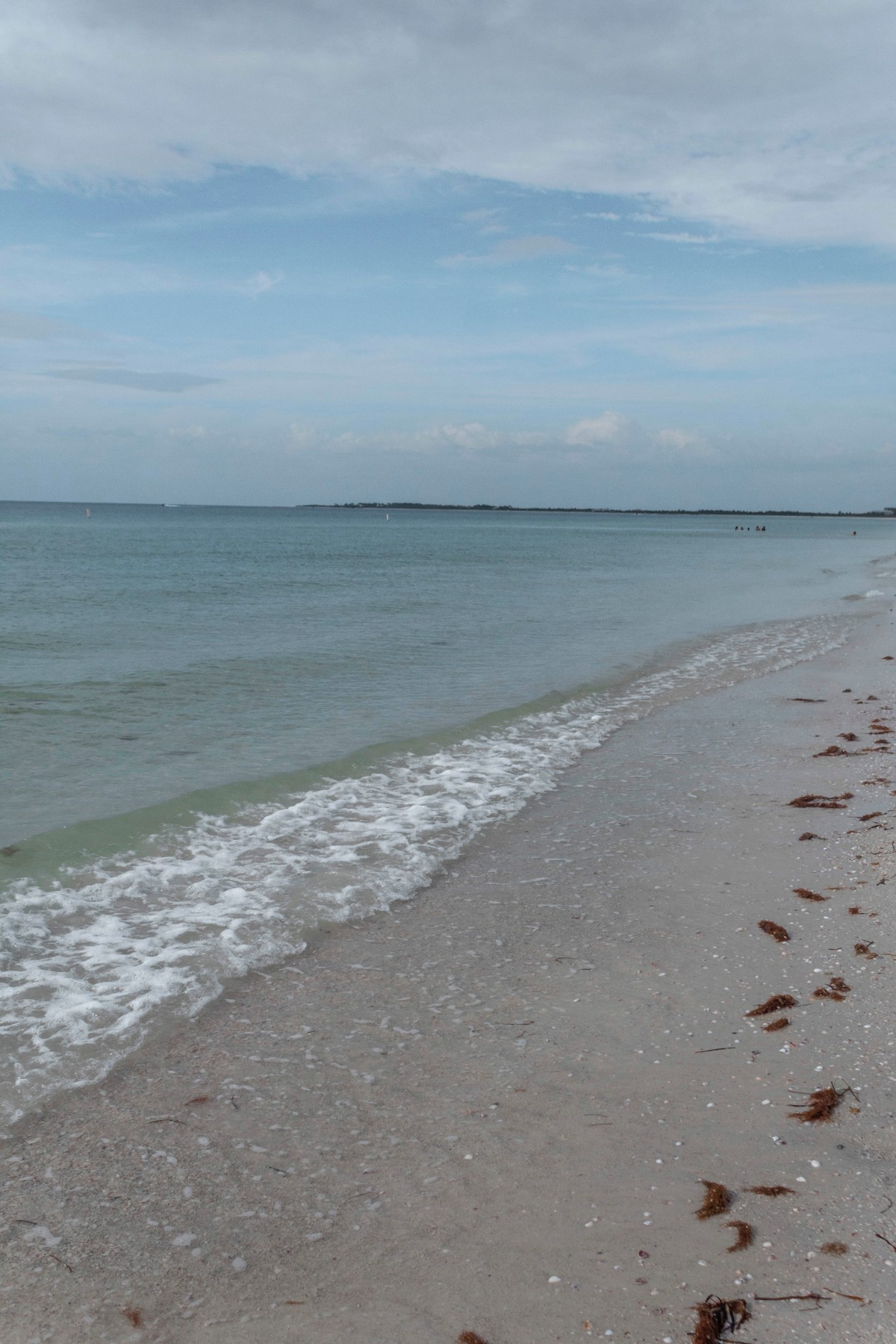 Honeymoon Island/Caladesi Beach Coast