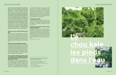 Article chou Kale Les Sourciers