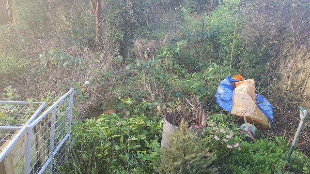 A garden covered in a mess of brambles and dead grass.