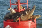 sealions_gallery