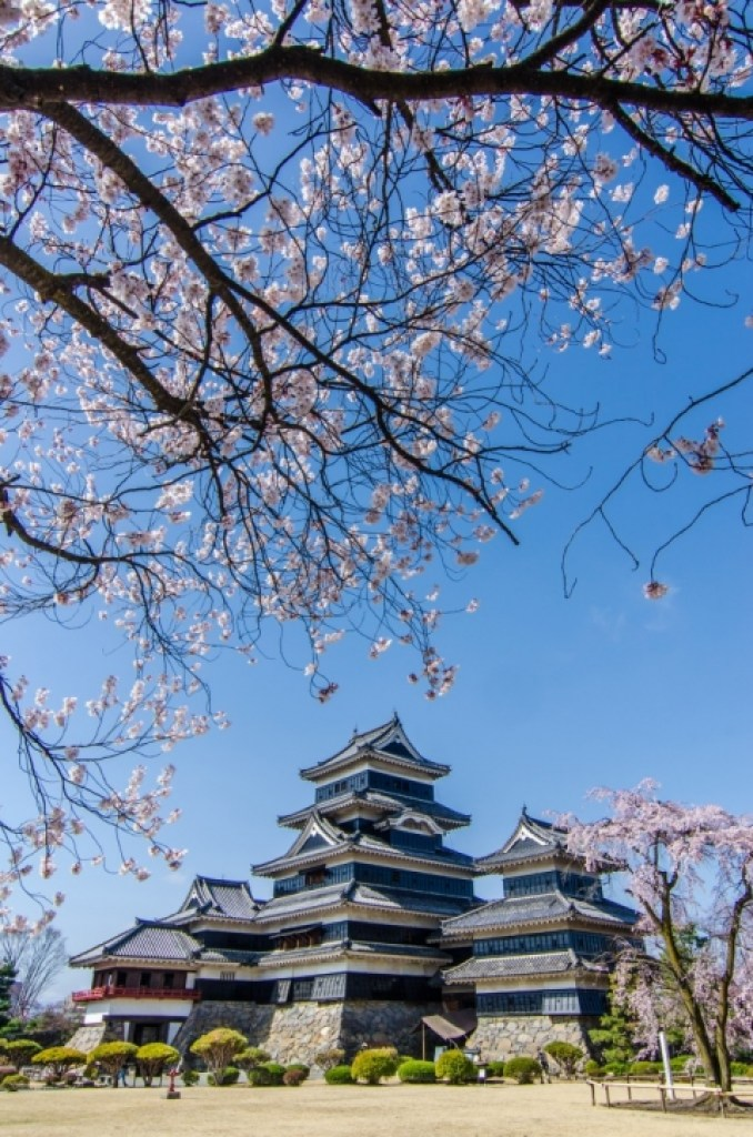 Photo of Matsumoto Castle and Cherry Blossoms