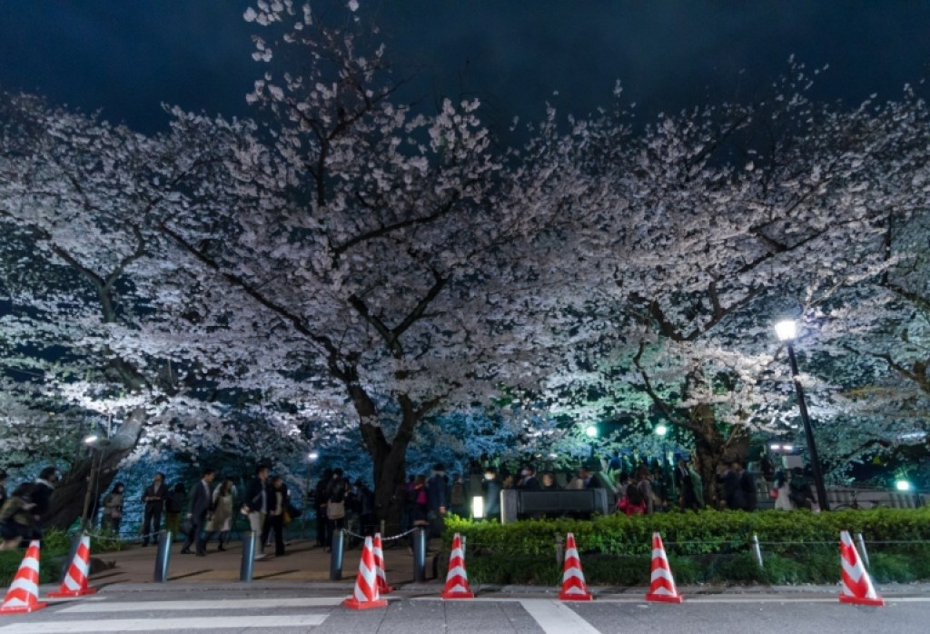 Street with cherry blossoms in Japan