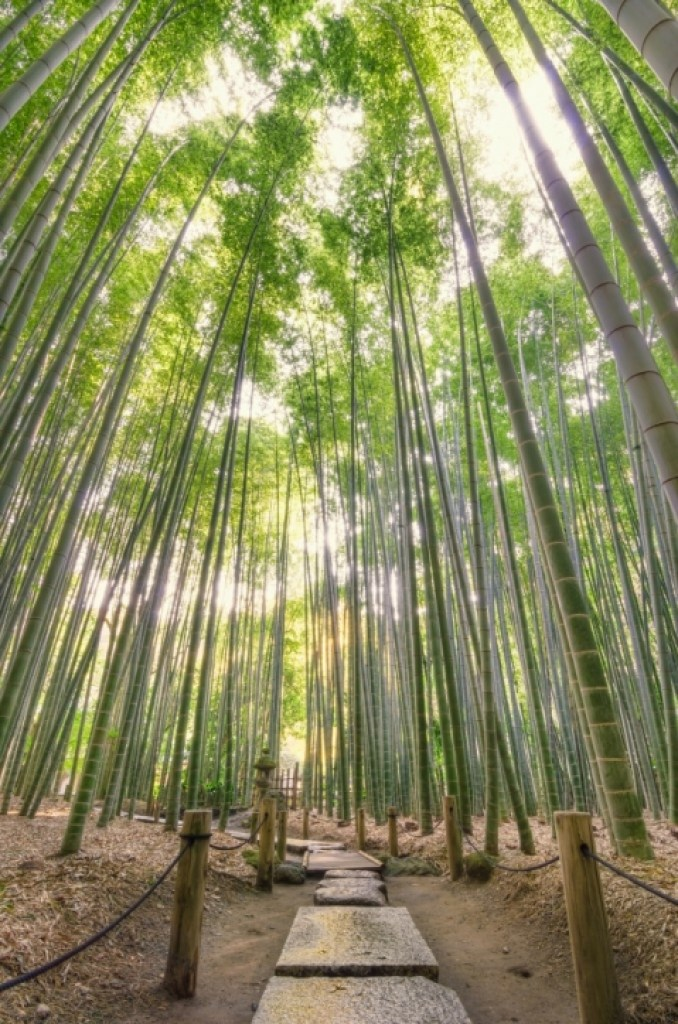 photo of bamboo forest in Japan