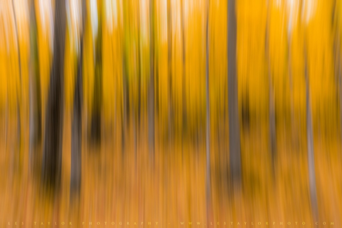Abstract autumn image dragging