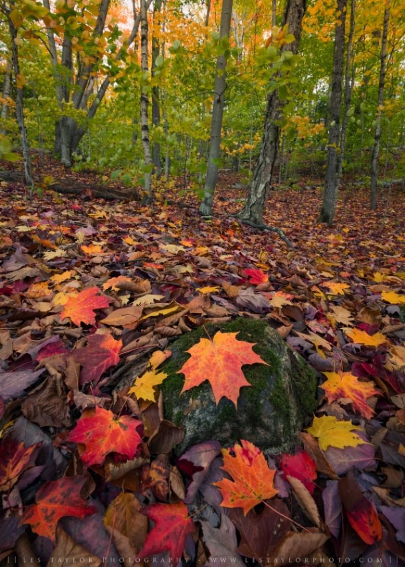 Fallen leaves in Crawford Notch Autumn