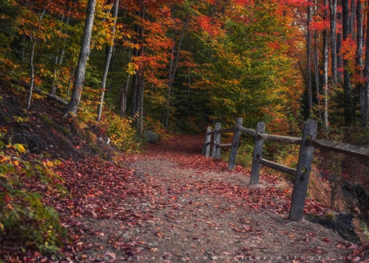 Autumn Path new england