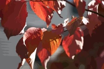 DSC_0176-tree-leaves