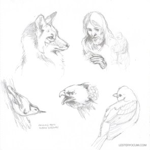 Fox and Birds Sketches