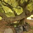 Charme Jardin des plantes de Paris (26)