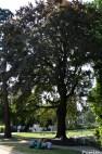 Hêtre square Verdrel Levillain Damien (1)