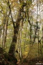 Yannick Morhan, foret de Verdun, Meuse, arbre observatoire, guerre