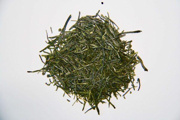 Grand cru de thé vert récolté lors de la première récolte