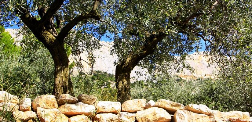 Circuit de l'Olive dans le Vaucluse