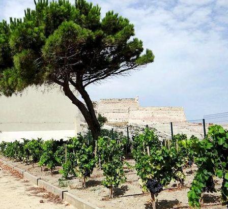 Vignobles urbains….à Marseille