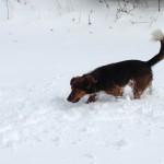J'ai dit au revoir à la neige !!!!