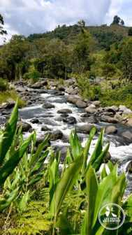 Rivière Rio Quindio à Salento en Colombie