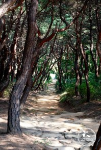 Forêt à Gyeongju Coree-du-sud