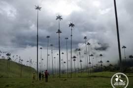 Vallée del Cocora, Salento, Colombie