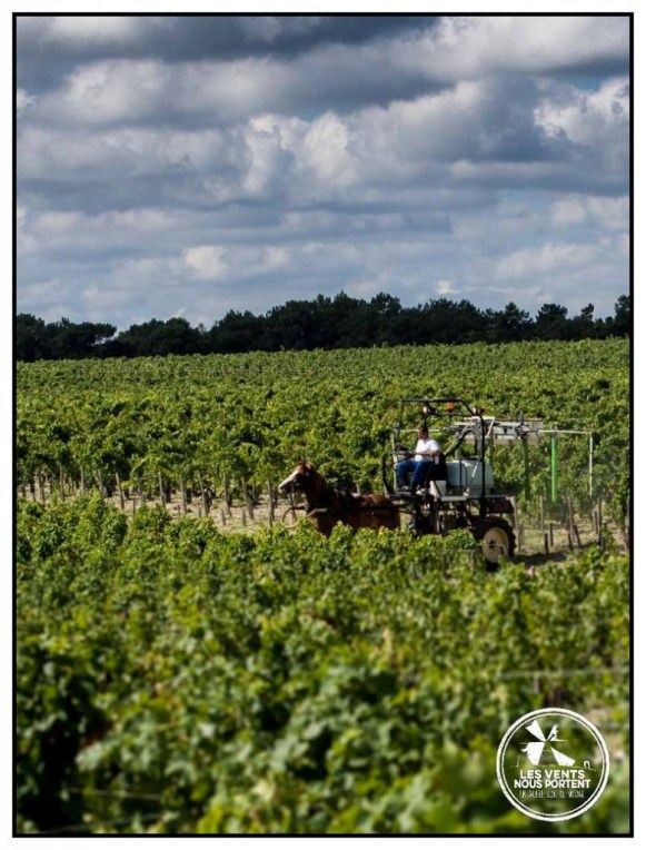 Pontet Canet Bordeaux Photo Samuel Bourille