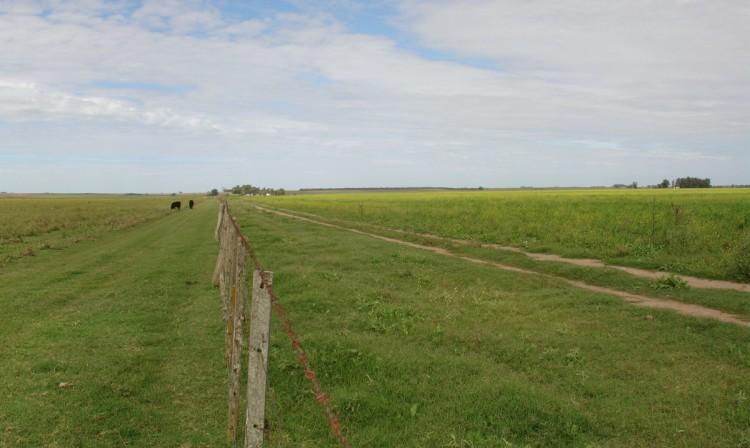 Pampa Argentine