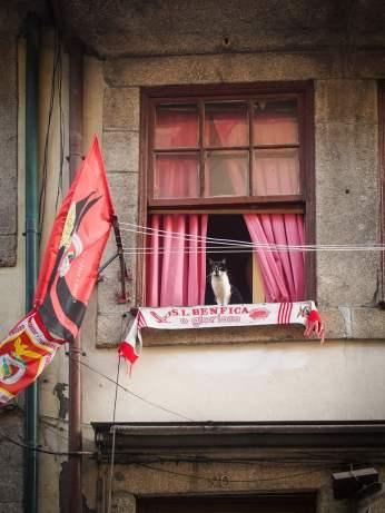 drôle de chat sur la fenêtre avec drapeau de l'ennemi juré le benfica lisbonne a porto voyage portugal