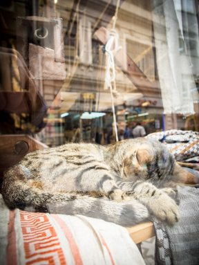 chat-dans-vitrine-magasin-tissus-voyage-istanbul-turquie