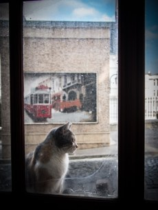 chat-station-tunel-istanbul-voyage-turquie
