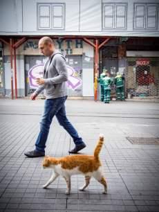 passant-chat-voyage-istanbul