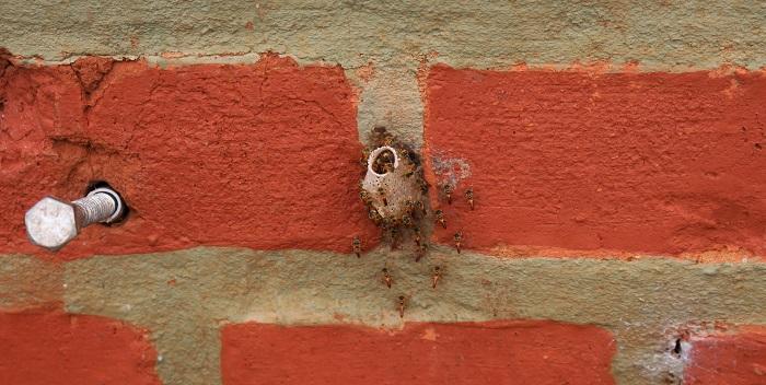 mini-abeilles
