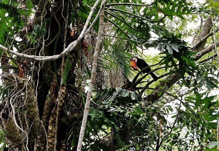 118-toucan