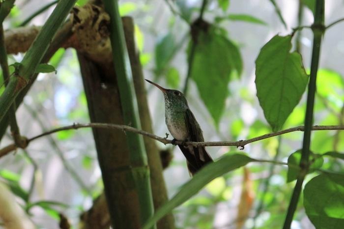 petit colibri!