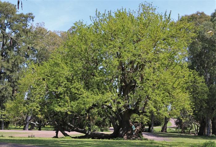 l'arbre-refuge