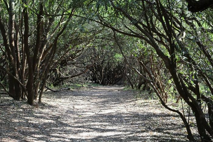 forêt des bords du fleuve