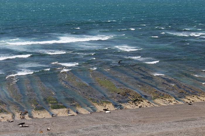 Elephants de mer et reste de l'ancre de l'épave de La Lolita qui a sombré lors d'une tempête en 1905