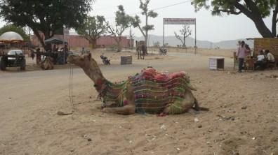 Pushkar (13)