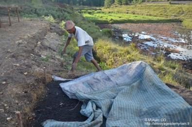 Pendant ce Joanas a planté son riz et le coyvre pour qu'il pousse plus vite!