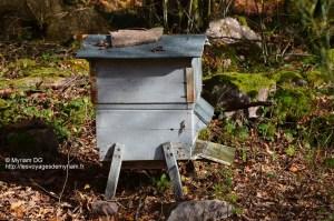 La seule ruche des Contances qui a bien travaillé cette année!