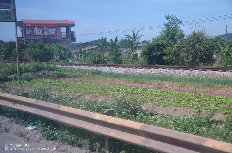 Les potagers, installés entre la route et la voie ferrée.