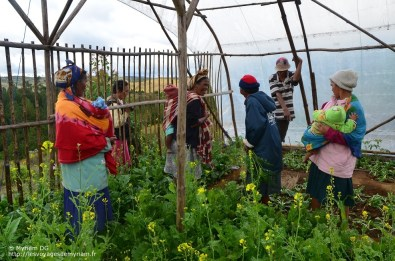 femmes-malagaches-agricultrices-odadi