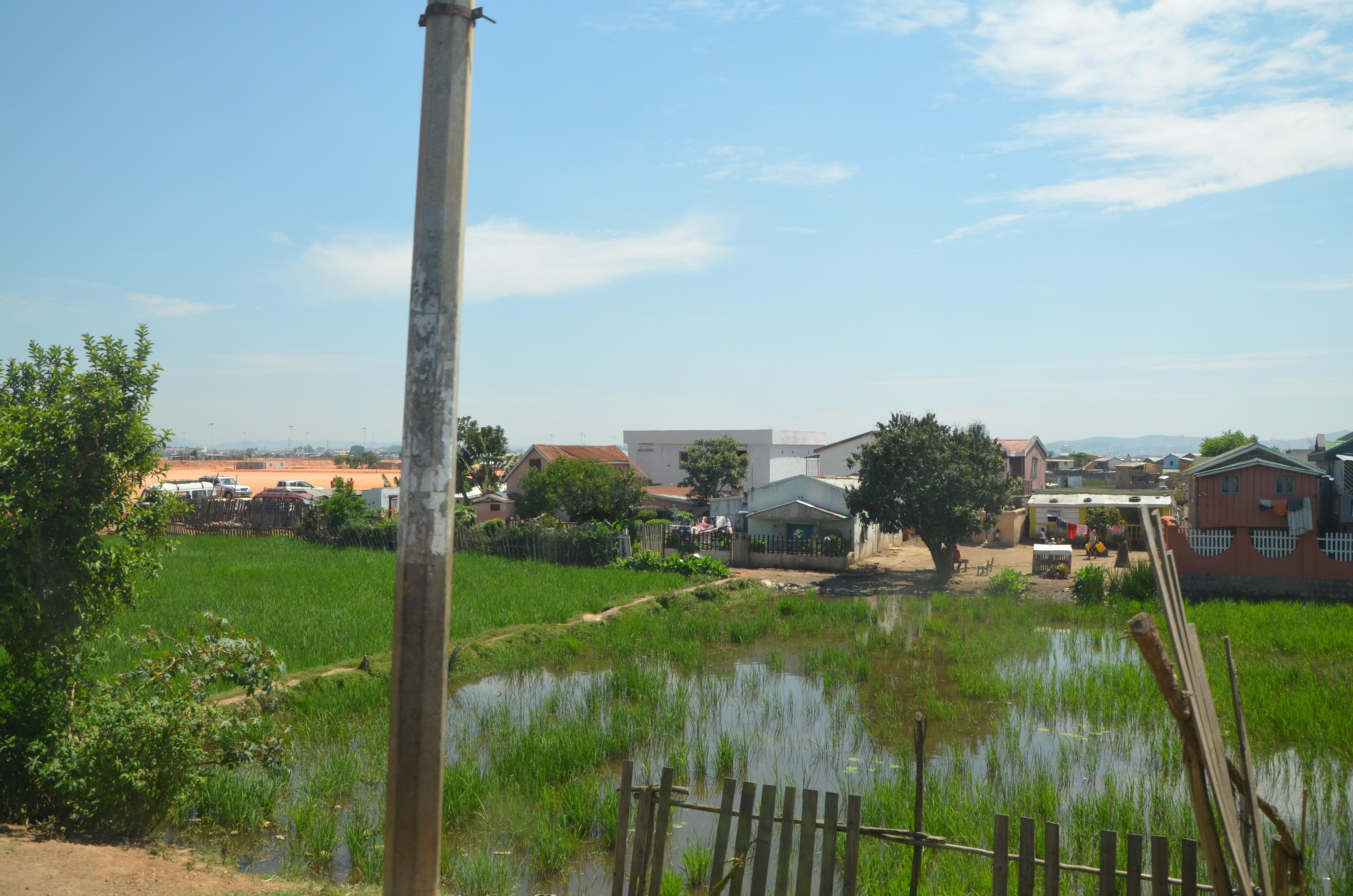 les rizières autours de Tana, à Madagascar
