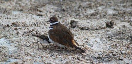 Un oiseau - Le Parc National de Yellowstone - Wyoming (USA)