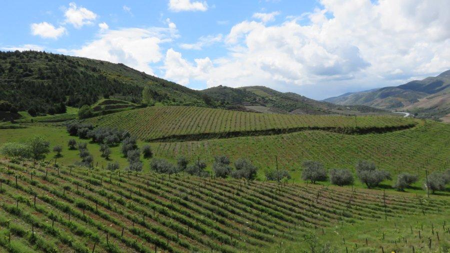 Vignobles du Douro
