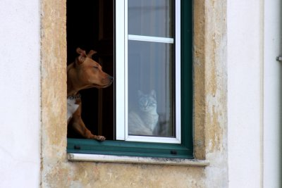 Coïmbra - Du monde aux fenêtres