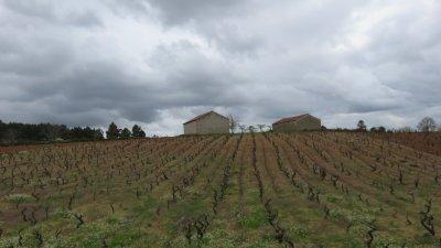 Les vignes entre Vinhais et Bragança