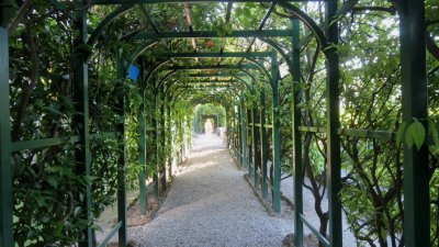 Allée d'orangers - villa Carlotta