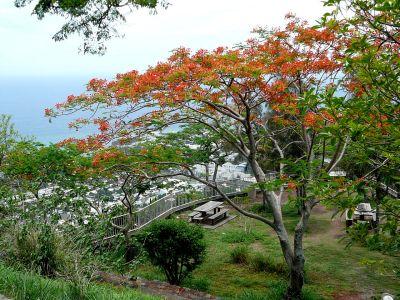 Flamboyant sur la route de La Montagne - St Denis (Réunion)