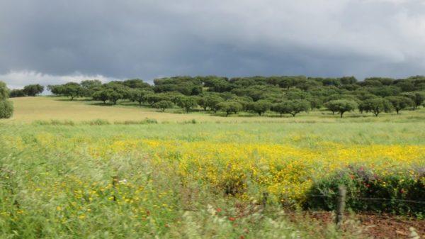 Sur la route entre Evoramonte et Estremoz