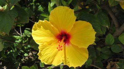 Jolie fleur dans le parc de Malaga