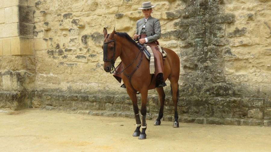 Cavalier espagnol sur le fameux pur-sang andalou